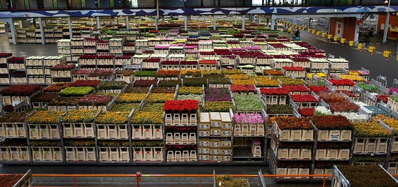 Flower Warehouse Netherlands Cold Storage